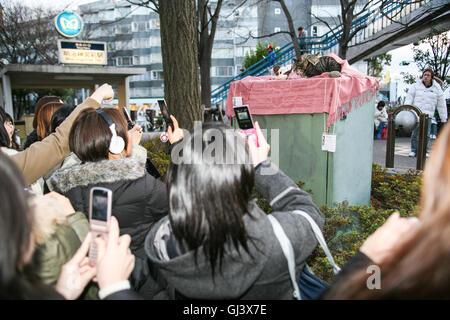 """Sonntag entlang der Omotesando Avenue """"der"""" Modestraße in Tokio, fotografieren Japan mit ihren Digitalkameras und - Stockfoto"""