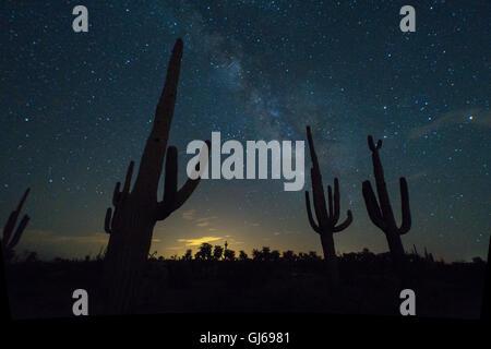 Milchstraße und Saguaros, (Carnegiea Gigantea), in der Nähe von Florance, Arizona, USA. - Stockfoto