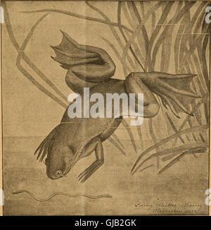 Blätter Für Aquarien Und Terrarien-Kunde (1902) - Stockfoto