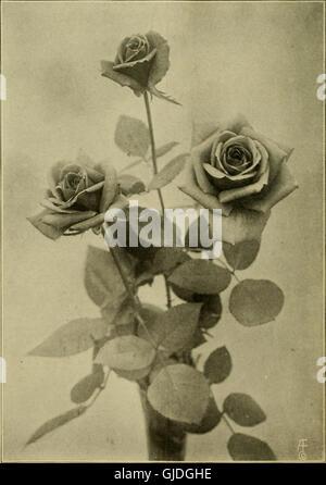 Die American Florist - eine wöchentliche Zeitschrift für den Handel (1912) - Stockfoto