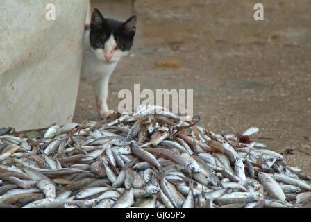 Lebensmittel Nahrungsmittel Fisch - Stockfoto