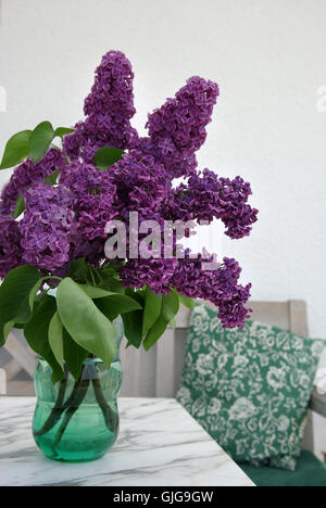 Blume Blume Pflanze - Stockfoto