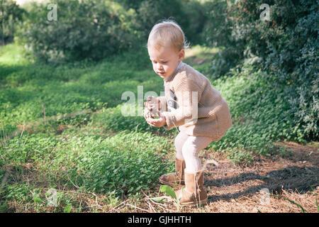 Junge Tannenzapfen im Wald sammeln - Stockfoto