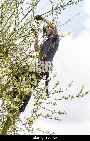 Baumpfleger überwucherten Zweige entfernen - Stockfoto