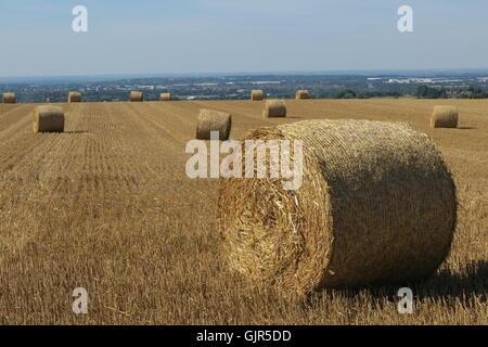 Ballen Weizenstroh verstreut über ein Feld, das vor kurzem auf Liddington Hügel, Wiltshire geerntet worden ist. - Stockfoto