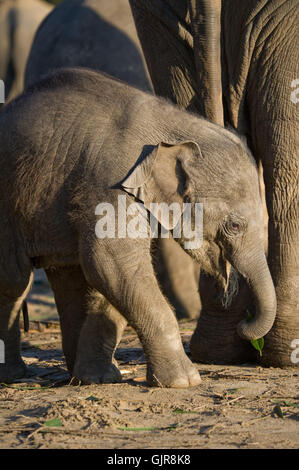 Afrika Elefanten klein - Stockfoto