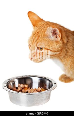 Futter Tier kleine - Stockfoto