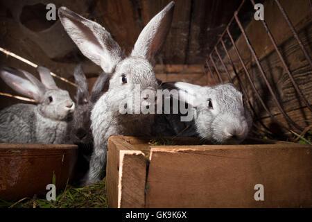kleines Tier Säugetier - Stockfoto