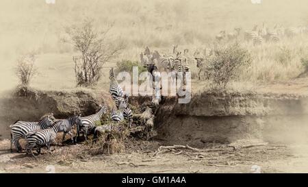 Gnus, Afrika, Migration, Tierwelt, Kenia, Mara, Herde, Safari, Park, National, Natur, Wild, Säugetier, Kreuzung, Serengeti, Stockfoto