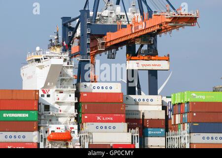 Kranführer, indem einen Container in einer Ladung Schiff den Hafen von Rotterdam. - Stockfoto