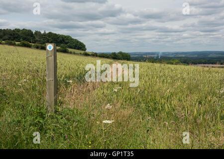 Wanderweg-Zeichen und Weg durch Phasen von Feldinhalten Winterweizen auf den Norden Wessex Downs im Juli - Stockfoto