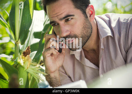 Inspektor Anruf tätigen, während Mais-Ernte im Bereich Inspektion - Stockfoto