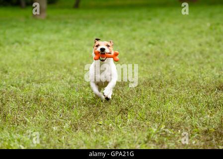 Hund mit Knochen, Zähne - Stockfoto