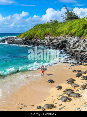 Hawaiianische Grüne Meeresschildkröten ruhen am Hookipa Beach, während Menschen das Meer genießen - Stockfoto