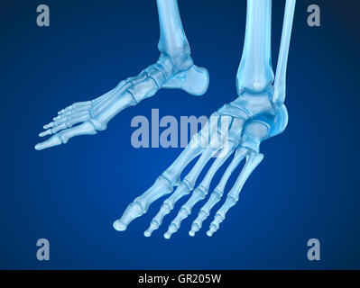Skelett Fuß, medizinisch genaue 3D-Illustration - Stockfoto