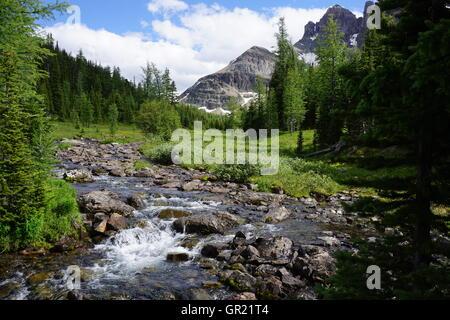 Creek in der Nähe von Lake Magog, Mount Assiniboine Provincial Park - Stockfoto