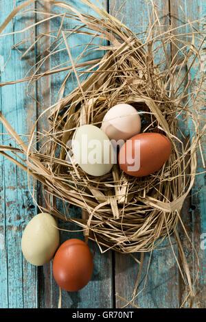 Eiern In einem Nest - Stockfoto