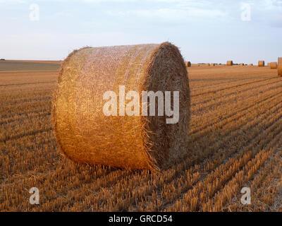 Strohballen auf abgeernteten Maisfeld - Stockfoto
