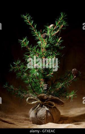 Weihnachtsbaum-Hintergrundinformationen - Stockfoto