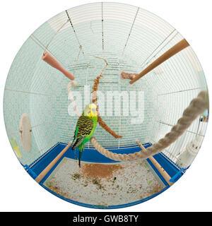 Budgie im Käfig mit einer 180-Grad-Fischauge-Linse - Stockfoto