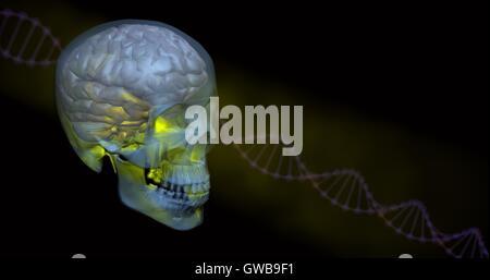 Leuchtende gelbe transparente Schädel und Gehirn mit DNA im Hintergrund - Stockfoto