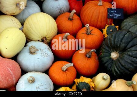 Verschiedene farbige Kürbisse - Stockfoto