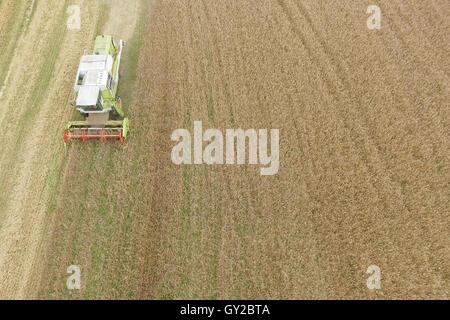Luftaufnahme des kombinieren Ernte Herbst Kornfeld - Stockfoto