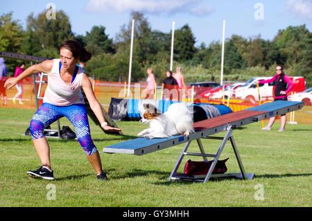 Eine junge Frau, die im Wettbewerb mit Hund Agility Wettkämpfe mit ihrem Papillon Hund auf der Schaukel - Stockfoto