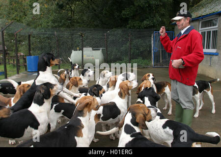 Barry Todhunter, Jäger von Blencathra Jagdhunden in ihren Zwingern in Threlkeld im Lake District, England. - Stockfoto