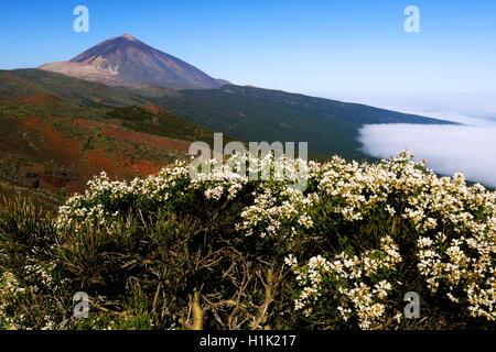 Vulkan Pico del Teide, Teide-Nationalpark, Parque Nacional de Las Canadas del Teide, Teneriffa, Kanarische Inseln, - Stockfoto