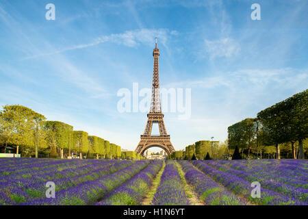Schöne lila Lavendel mit Eiffelturm im Hintergrund in Paris, Frankreich eingereicht. Eiffelturm in Morgen in Paris, - Stockfoto