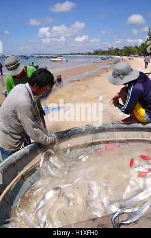 Lagi, Vietnam - 26. Februar 2012: Lokale Fischer sind Fische aus ihrer Fischernetze am Strand Lagi entfernen - Stockfoto