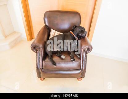Schwarzer hund auf seinem braunen freund schlafen for Braune ledersessel