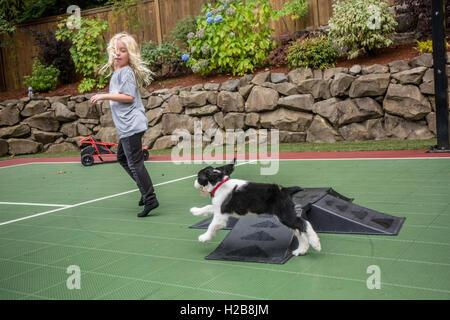 Zwei Monate altes Springer Spaniel Welpen, Tre, Jagd nach seinem sieben Jahre alte Besitzer in Issaquah, Washington, - Stockfoto