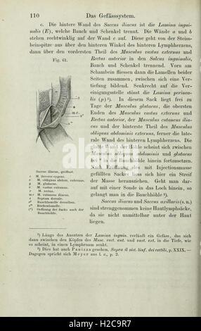 Anatomie des Frosches (Seite 110) sterben - Stockfoto