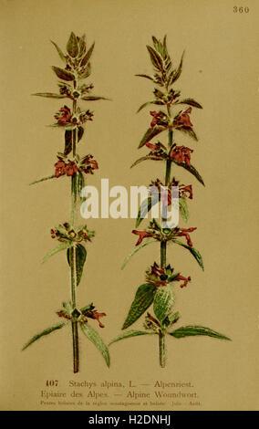 Atlas De La Flora alpine (Seite 13)