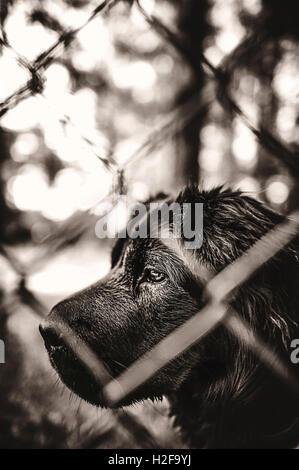 schwarze schöne Hund hinter den Drahtzaun - Stockfoto