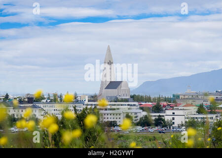 Blick nach Norden zur Kirche Hallgrímskirkja durch eine Wildblumenwiese mit Butterblumen im Sommer. Hügel Öskjuhlíð - Stockfoto