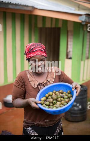 Ein Fair-Trade-Macadamia-Nuss-Züchter hält frisch geerntete Nüssen in Kirinyaga County, Kenia. - Stockfoto