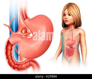 Illustration eines Kindes Dünndarm anatomische Schichten Stockfoto ...