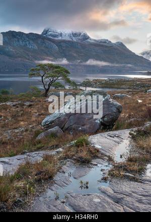 Einsame Kiefer Baum am Ufer des Loch Maree, mit Schnee bedeckt Slioch im Hintergrund, Schottisches Hochland, Schottland - Stockfoto