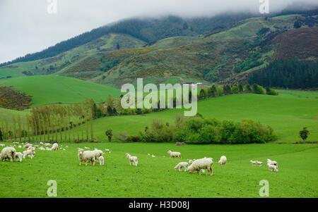 Schöne Landschaft der Schäferei mit Schaf und Lamm zu Fuß auf den grünen Rasen und die grünen Hügel im Hintergrund - Stockfoto