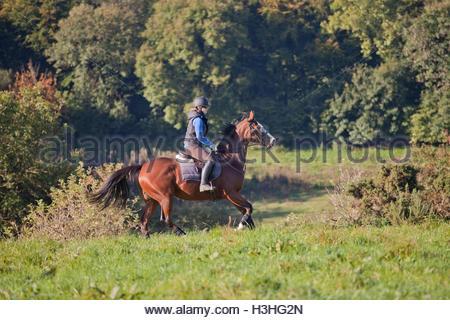 Junge Frau, die ein Pferd in ein offenes Feld UK Trab - Stockfoto