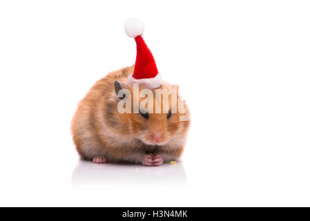 Niedliche Hamster mit Weihnachtsmütze isoliert auf weiss - Stockfoto