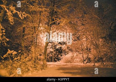 Winterzeit Wald nach verschneiten, Laterne beleuchten Nacht Schuss - Stockfoto