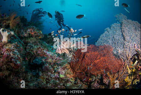 Bunten tropischen Korallenriff mit Feuerfische und Taucher - Stockfoto