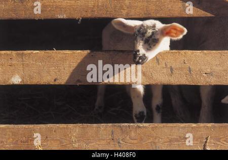 Stall Merino Landschaf Tier Tiere Tier Nutzen Nutzen Tiere