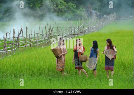 Vier Frauen, die zu Fuß durch ein Reisfeld, Thailand - Stockfoto