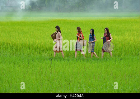 Vier Frauen gehen durch Reisfelder, Thailand - Stockfoto