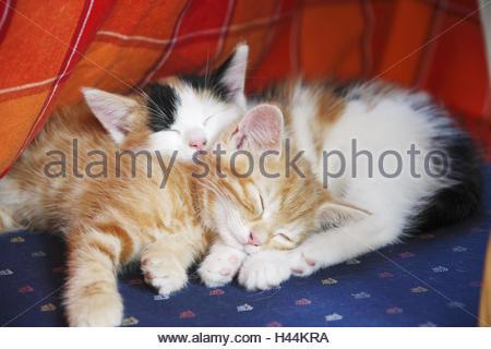 Hauskatzen, junge, schlafen, in der Nähe, - Stockfoto